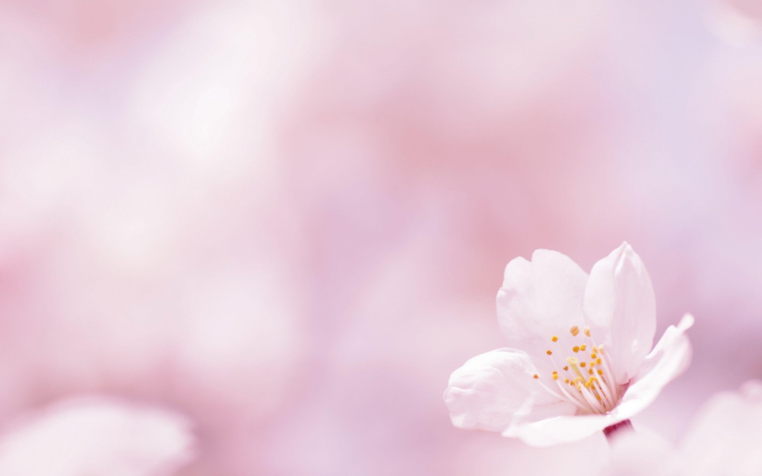 あなたの心に花一輪、優しい花が咲きますように。